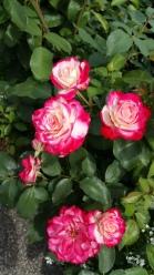 Botanical Garden Flower 1