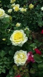 Botanical Garden Flower 3