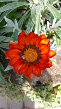 Botanical Garden Flower